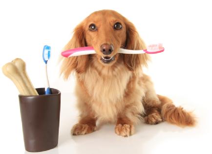 ультразвуковая чистка зубов собаке