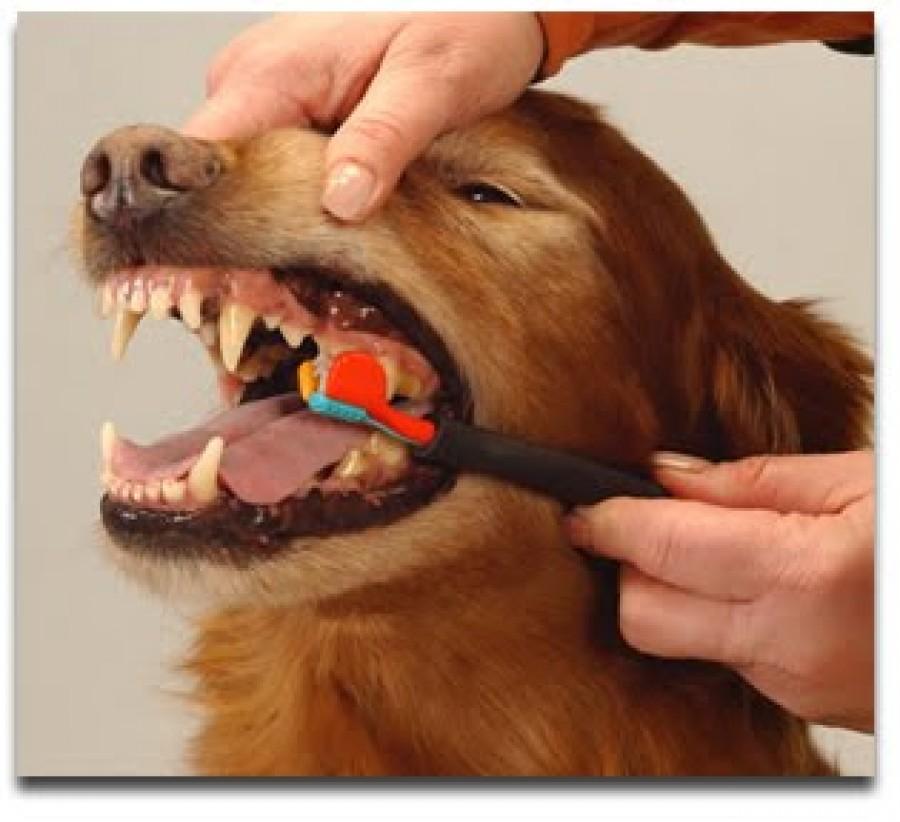 почистить зубы собаке
